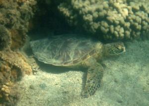 Kauai Wildlife