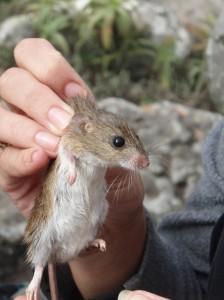Measuring Mice!