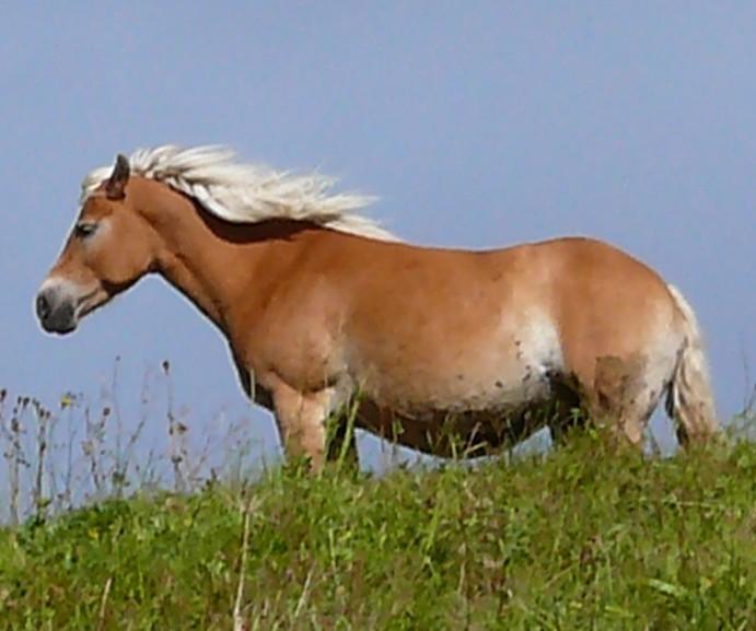 Wild Horses! Help Me!!
